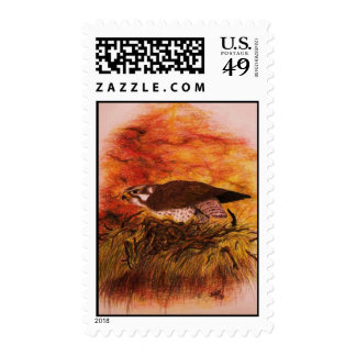 Prarrie Falcon Stamp