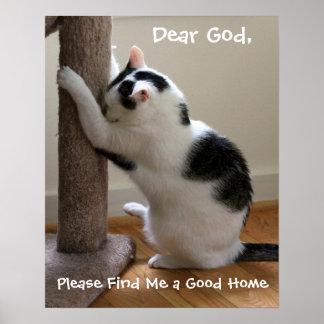 Prayer for Homeless Cats - Poster