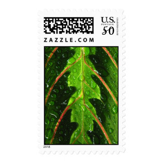 Prayer Plant Rain Drops Postage Stamps