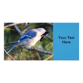 Praying Blue Jay Photo Cards