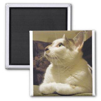 Praying Cat 2 Inch Square Magnet