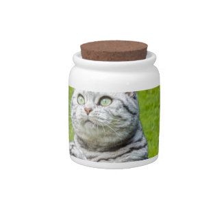 Praying cat on green grass candy jar