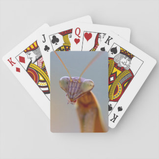 Praying Mantids Playing Cards