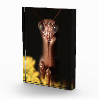 praying mantis acrylic award