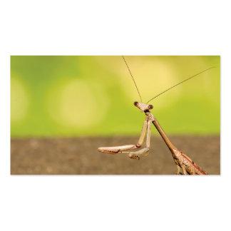 Praying Mantis Business Card
