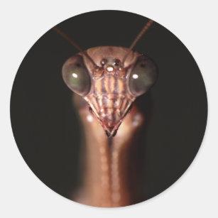Praying Mantis Stickers Zazzle