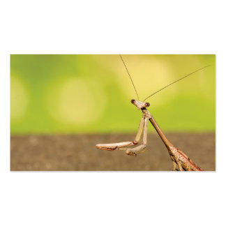 Praying Mantis Double-Sided Standard Business Cards (Pack Of 100)