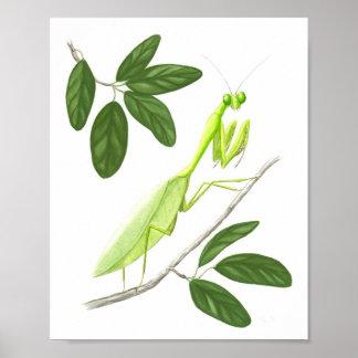 Praying Mantis Fine Art Print