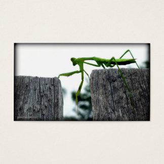 Praying Mantis Hand-out Card