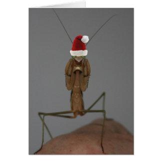 Praying Mantis Holiday Card