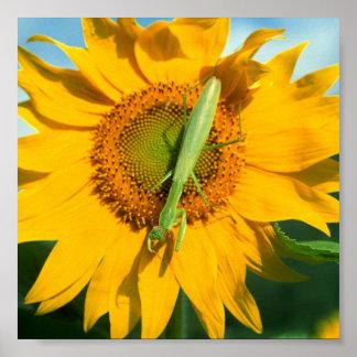 Praying Mantis in Sunflower Poster