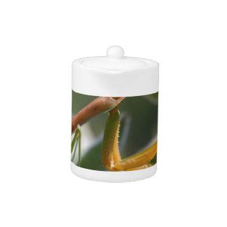 Praying Mantis Insect Teapot