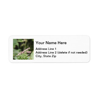 Praying Mantis Label