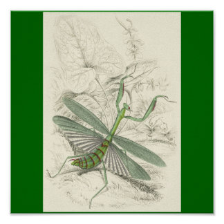 Praying Mantis, Mantis Religiosa Poster