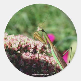 Praying Mantis Nature Photo Sticker Label