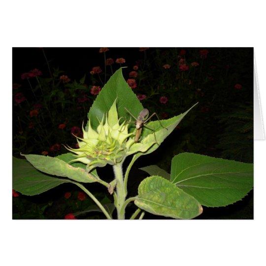 Praying Mantis On Sunflower Card