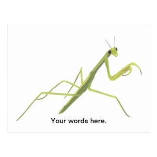 Praying Mantis Painting Custom Postcards