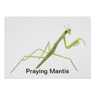 Praying Mantis Painting Custom Posters