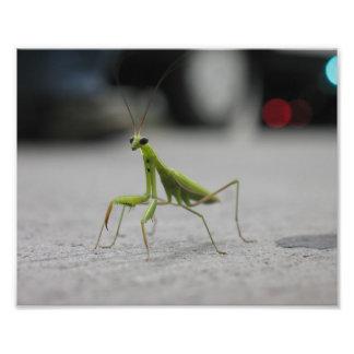 Praying Mantis Photo Print