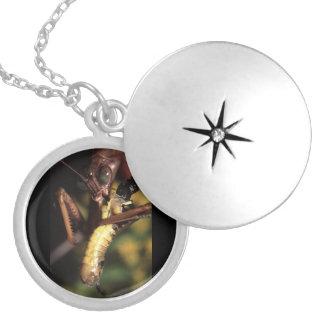 praying mantis round locket necklace