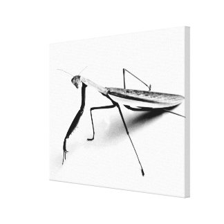 Praying Mantis Sketch Canvas Print