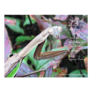 Praying Mantis with quote | Photo Print