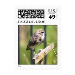 Praying Owl stamp