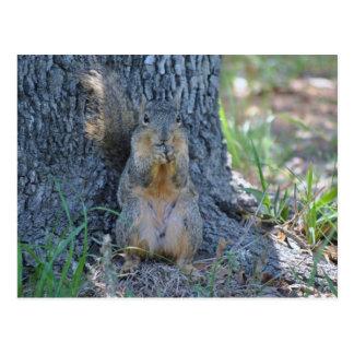 Praying Squirrel Post Card