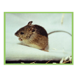 Prebles Meadow Jumping Mouse Postcard