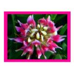 Precioso en postales rosadas