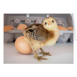 Precious Baby Chick and Eggs Greeting Card