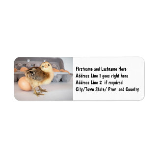 Precious Baby Chick and Eggs Label