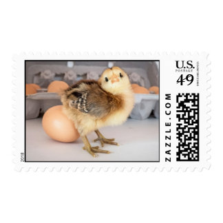 Precious Baby Chick and Eggs Postage Stamp