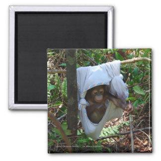 Precious Baby Orangutan Playground SwingMagnet Magnet