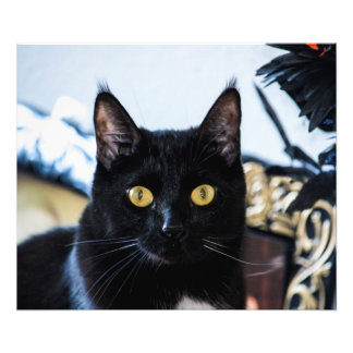 Precious Black Cat Photo Print