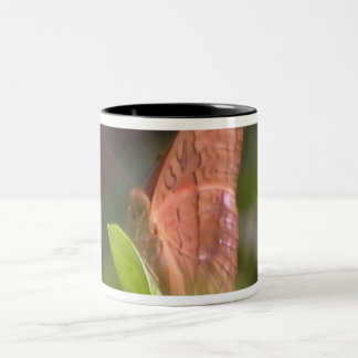 Precious Butterfly Two-Tone Coffee Mug