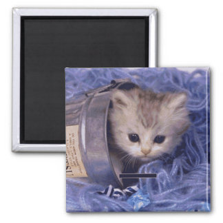 Precious Cat and Kitten Photo Cards, Gifts, Postag Magnet