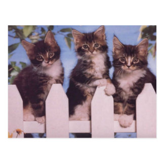 Precious Cat and Kitten Photo Cards, Gifts, Postag Postcard