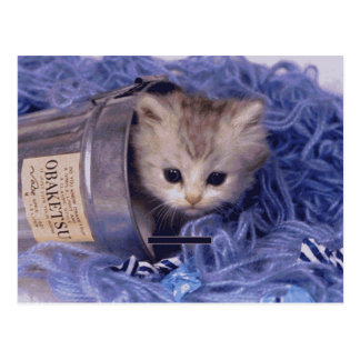 Precious Cat and Kitten Photo Cards, Gifts, Postag Post Cards