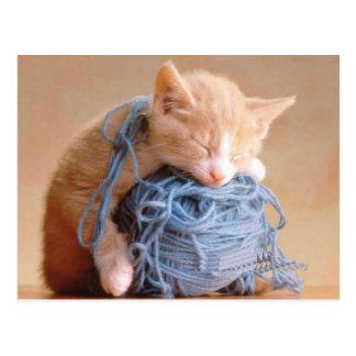 Precious Cat and Kitten Photos, Gifts - Customize! Postcard