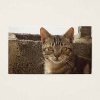 Precious cat   Card De Visita