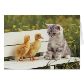 Precious Cats, Kittens Cards, Gifts -  Customize!