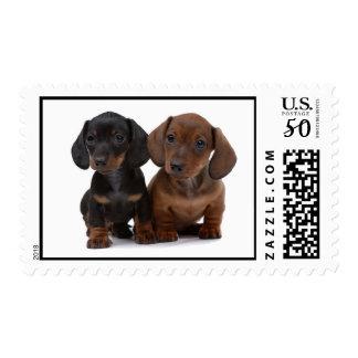 Precious Dachshund Pups Postage