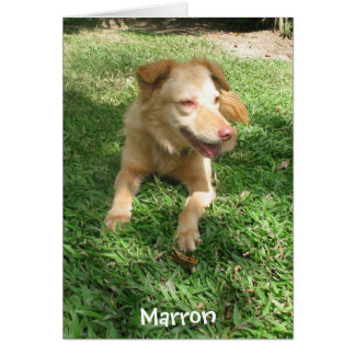 Precious Dog Series:  Marron Card