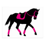 Precious Dressage Horse Postcard
