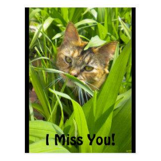 "Precious Jungle Kitty ""missing you"" Postcard"