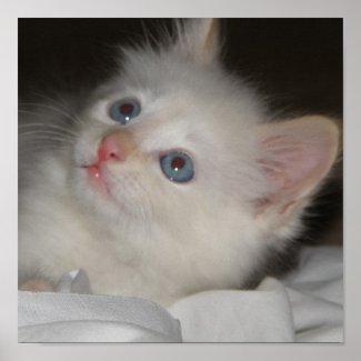 Precious Kitten Poster print