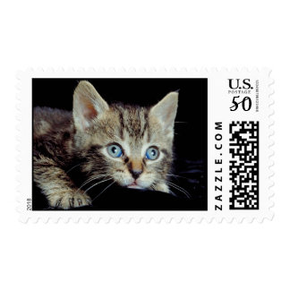 Precious Kitten With Unbelievable Blue Eyes Postage
