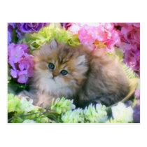 Precious Kittens Fluffy Cats Pets Postcard