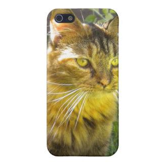 Precious Kitty iPhone 4 case